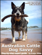australian-cattle-dog-ebook